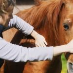 Equine: Animals in Transit (Short Journeys) Equine