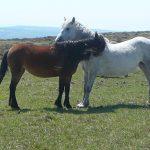 Practical Equine Ethology